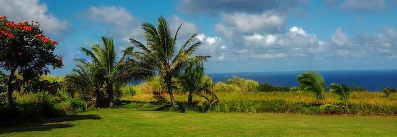 Mauiiii543