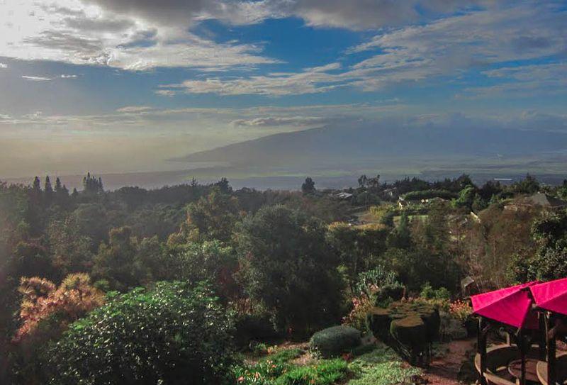 Mauii1