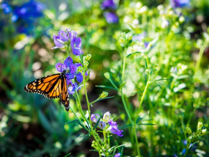 Botanical 1-03678