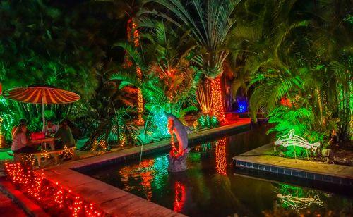 Holiday lights at the florida botanical gardens in largo - Florida botanical gardens christmas lights ...