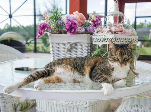 Cat-1277662_960_720