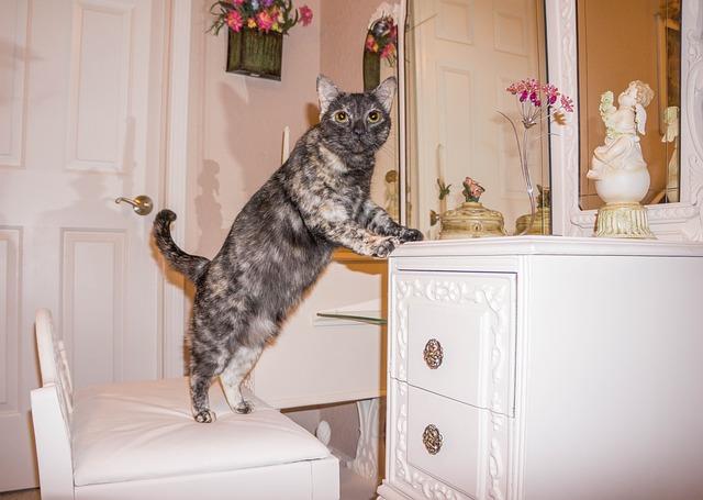 Cat-1004098_640
