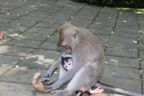 Bali-345410_960_720