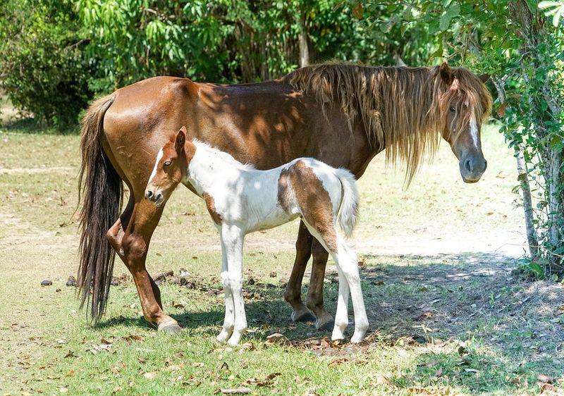 Foal-1326063_960_720