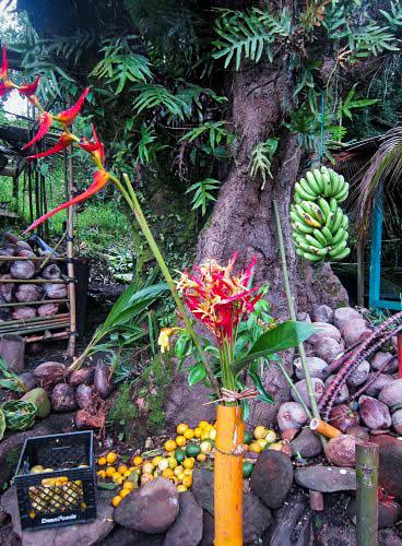 Mauiiii3