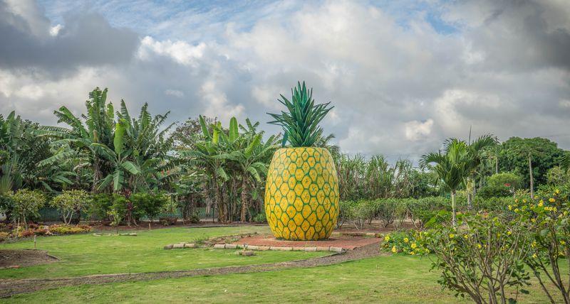 Pineapple-decoration-1037911