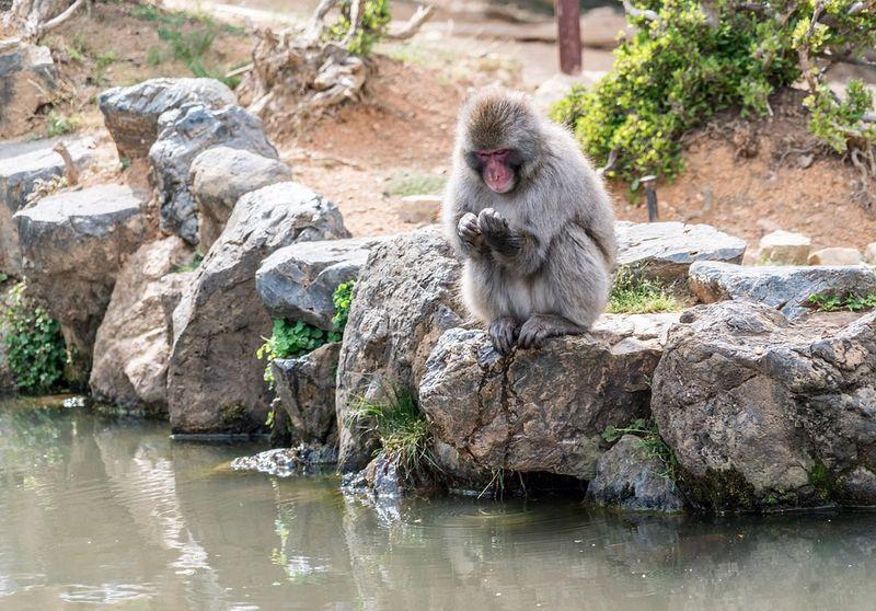 Arashiyama-1437272_960_720