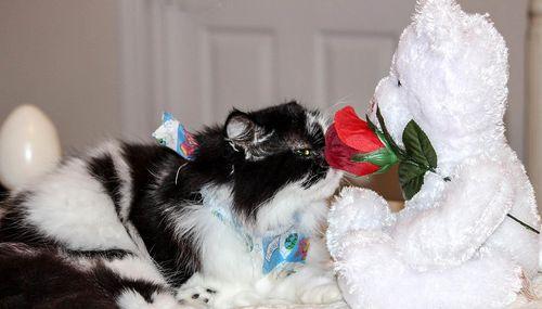 Cat-886609_1280