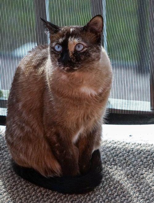 Cat-1212646_960_720