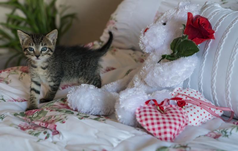 Kittens-1534081